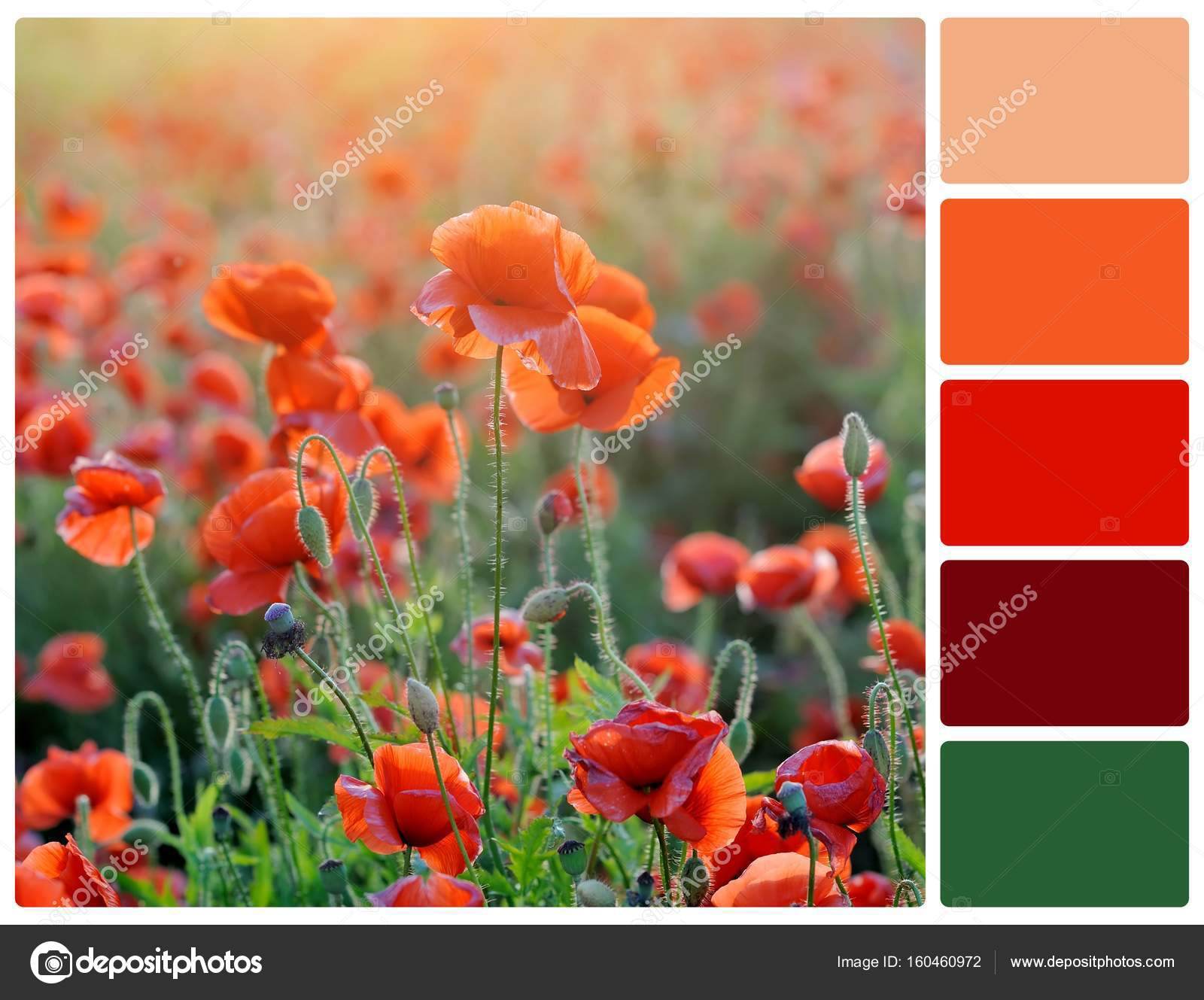 Poppy Flowers With Palette Color Swatches Stock Photo