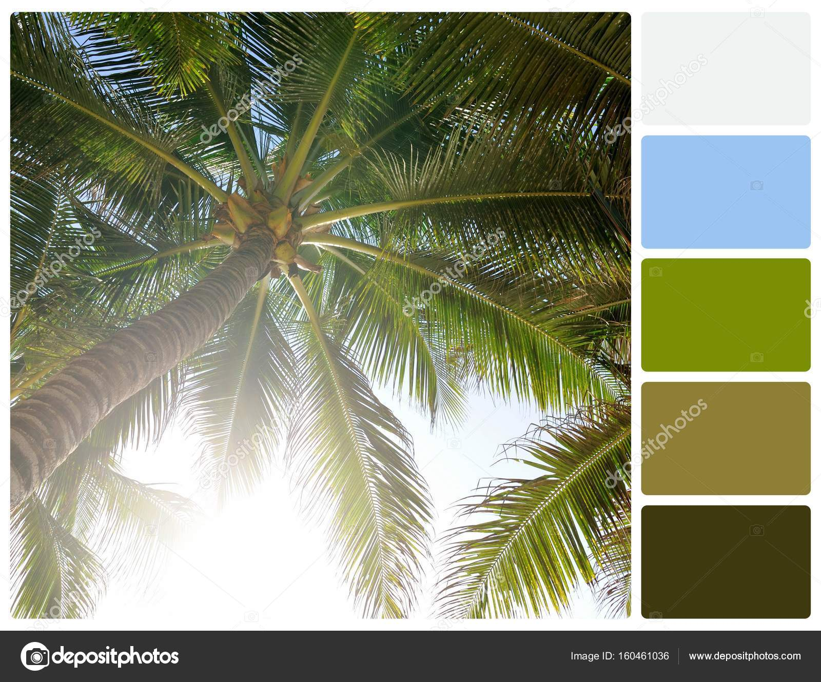 Palm tree with palette color swatches — Stock Photo © VolodymyrBur ...