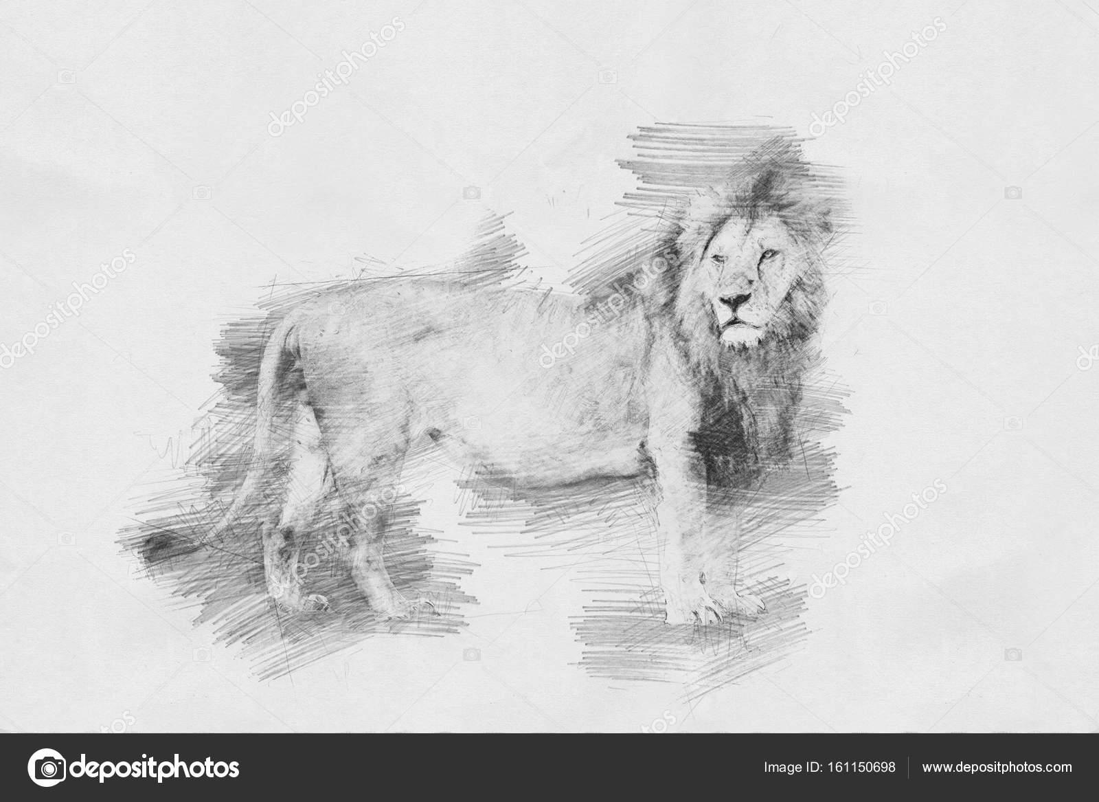 93838de11d6 Lion. Sketch with pencil — Stock Photo © VolodymyrBur  161150698