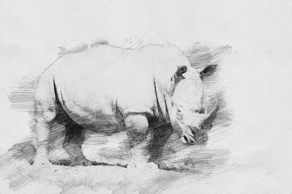 Rhino. Sketch with pencil