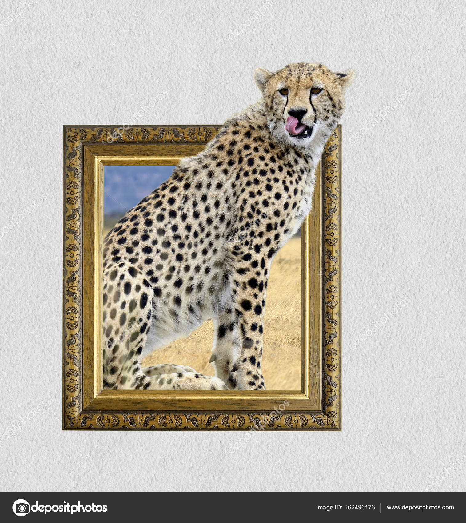 Cheetah in frame with 3d effect — Stock Photo © VolodymyrBur #162496176