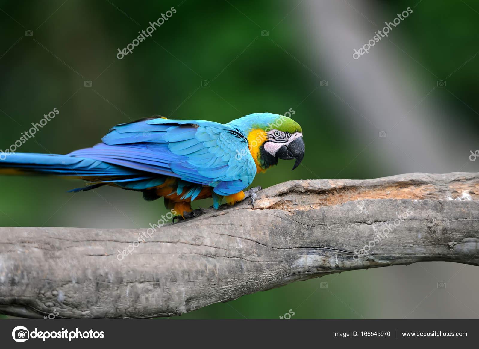 Μεγάλο πράσινο πουλί