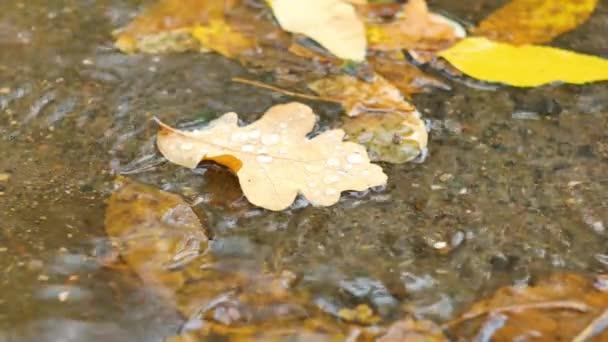 Closeup maple listy na podzim, plovoucí na vodě