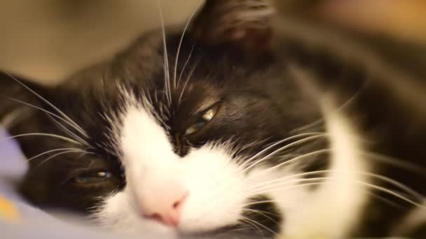A Cute Black And White Cat With Green Eyes Falls Asleep On The Sofa