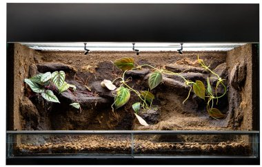 Terrarium to keep tropical jungle animals