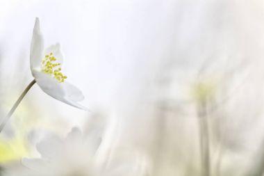 wild spring flower