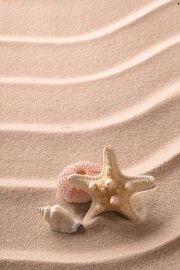 starfish and seashell lying on beach sand