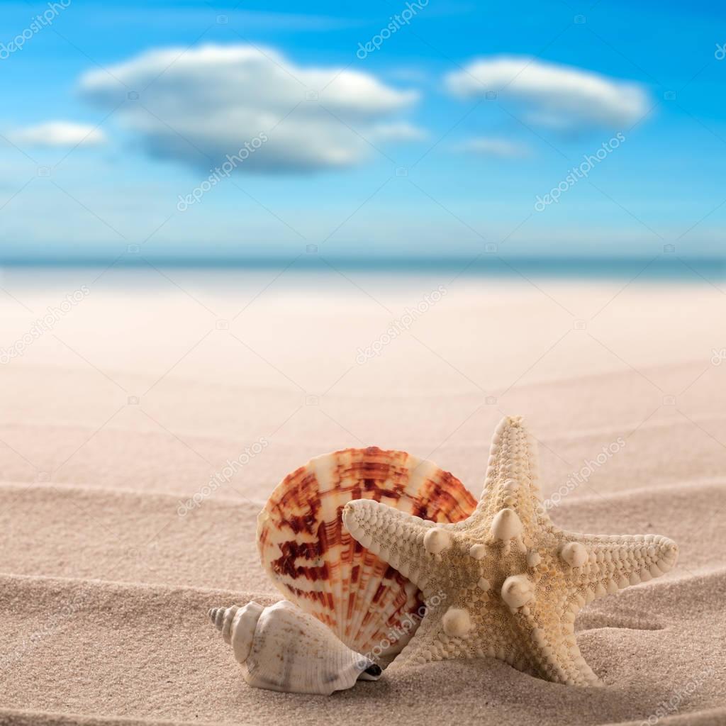 starfish on beach of tropical paradise island
