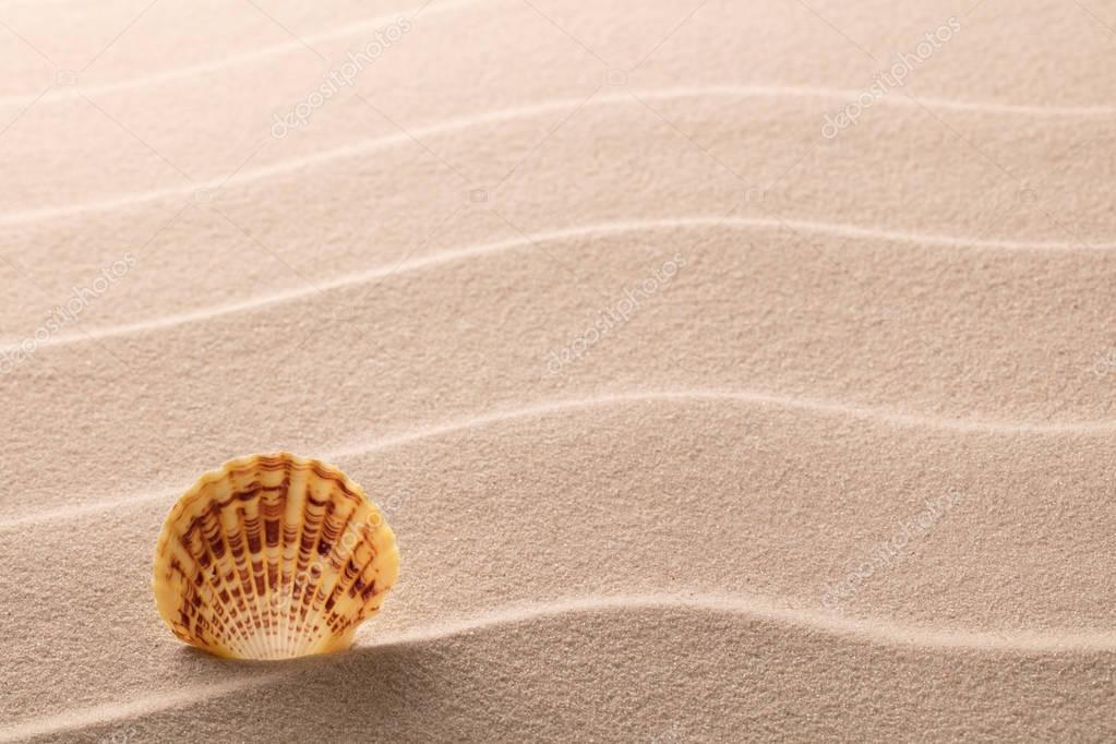 seashell lying on sand