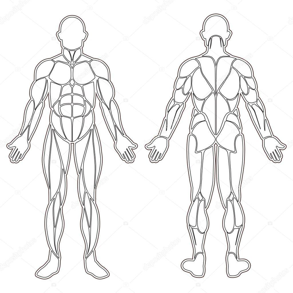 todos os grupos musculares do corpo humano