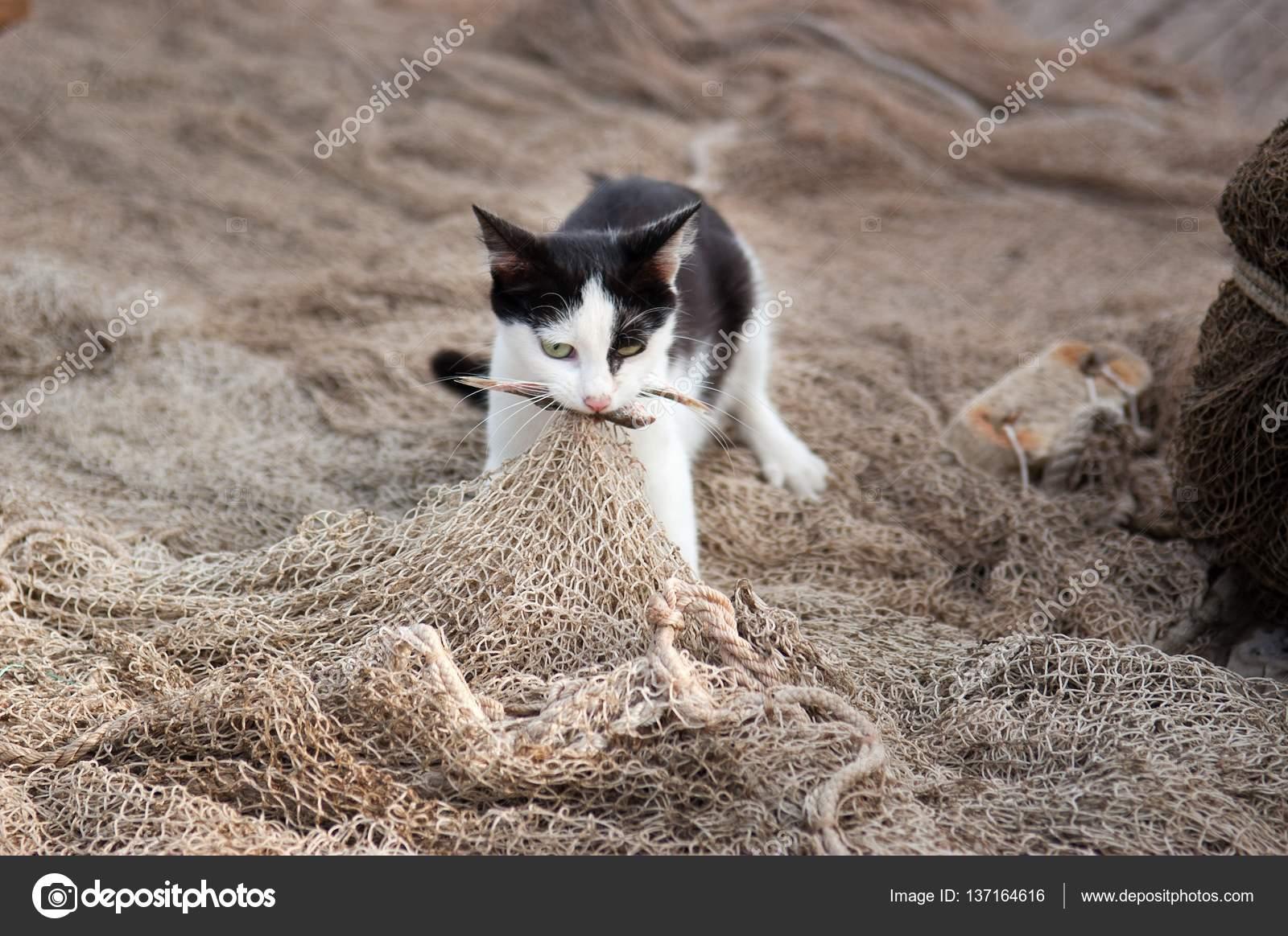 chat est captur le poisson sur le filet de p che photographie alisa24 137164616. Black Bedroom Furniture Sets. Home Design Ideas
