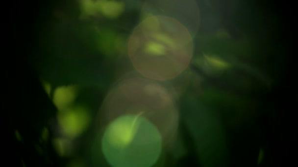Bella del sole attraverso foglie di albero verde