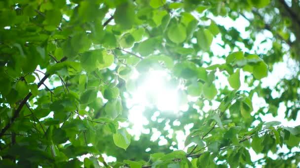 Krásné sluneční svit skrze listy stromů zelené