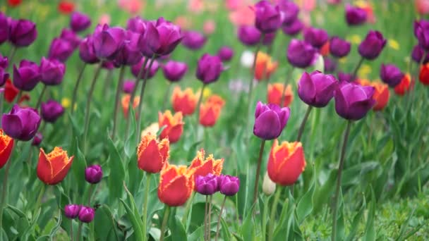 oblast jarních květin