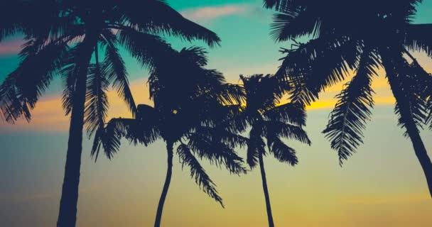 Hawai palmy při západu slunce