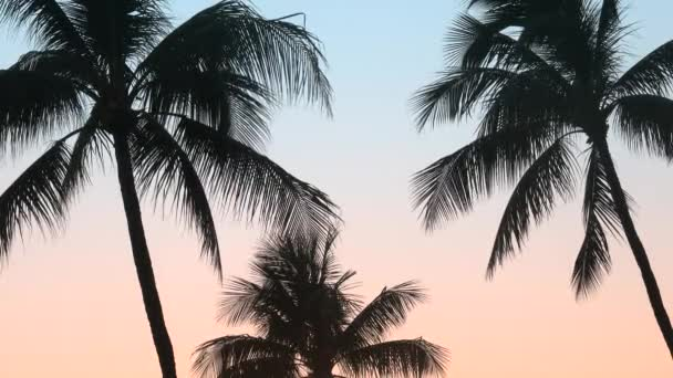 Retro Filtered Palm Trees In Hawaii At Sunset