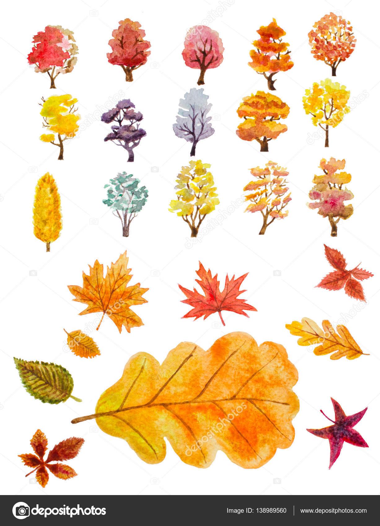Dibujos Arboles De Otoño Acuarela Conjunto De árboles De Otoño Y