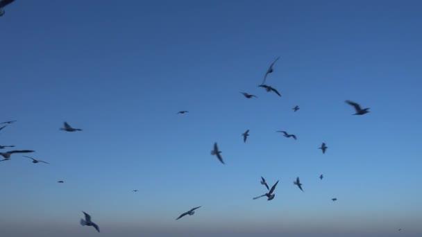 Vad seagulls repülés hibás csoportja