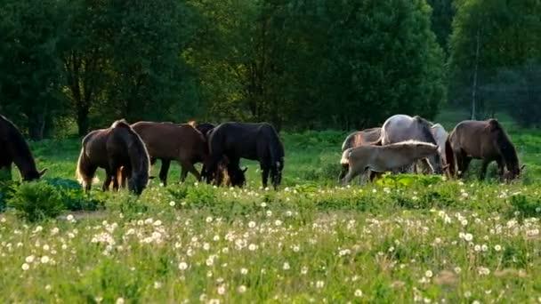 Pferde grasen bei Sonnenuntergang auf der Weide