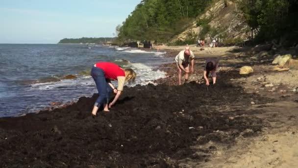 Lidé hledají amber v mořských řas na břehu Baltského moře