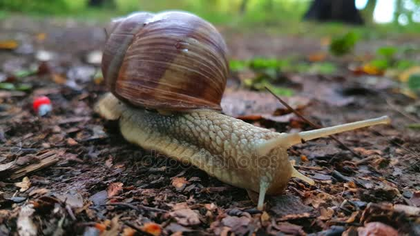 Snail crawls on the ground