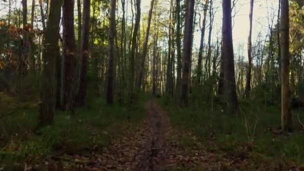Krásný borovicový les na podzim