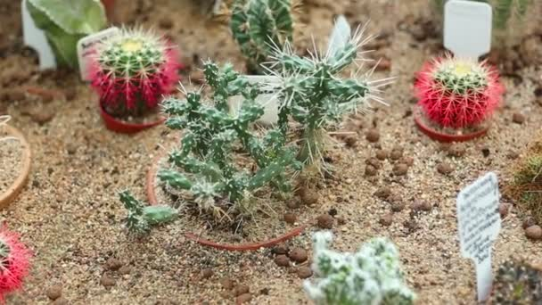 plantáž kaktusy ve skleníku