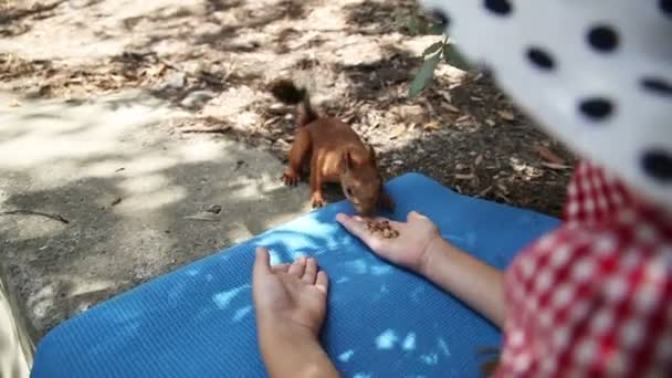 Happy girl feeding a squirrel out of hand. Pet trusts human child. Child animal feeds