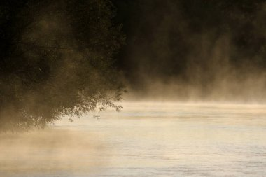 A willow tree leaning out above the golden mist rising off the Conestogo River, shot just outside St. Jacobs, Ontario, Canada.