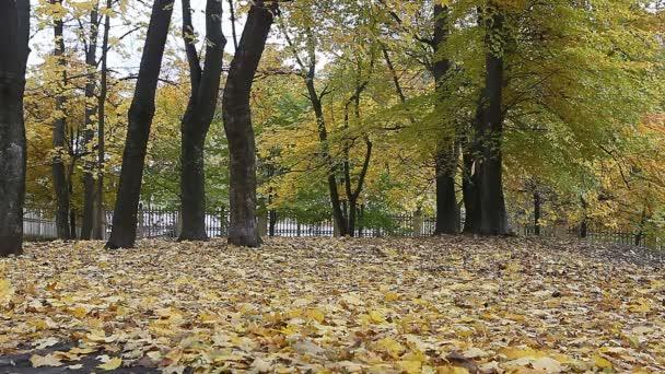 sárga őszi levelek a parkban