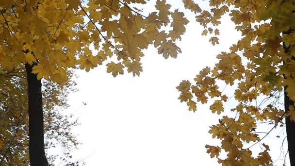 Yellow autumn leaves in the park