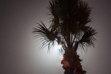 Tropic palm tree at night