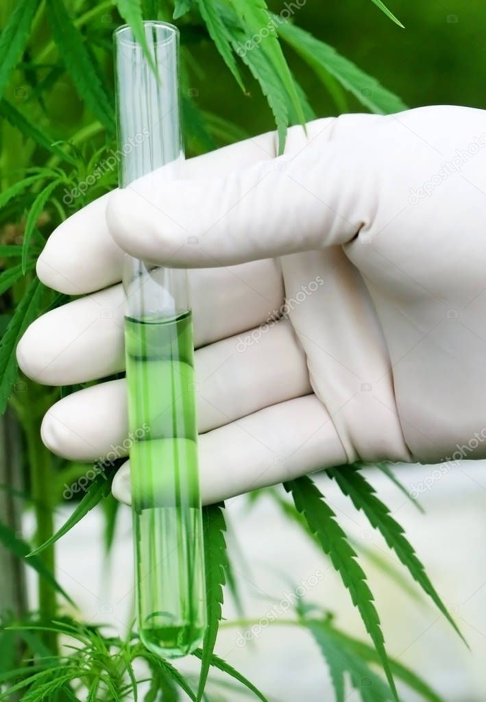 Cannabis extract in test tube