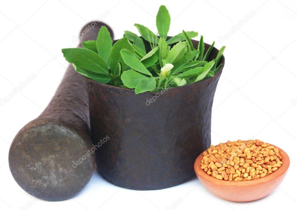 Fenugreek leaves with seeds