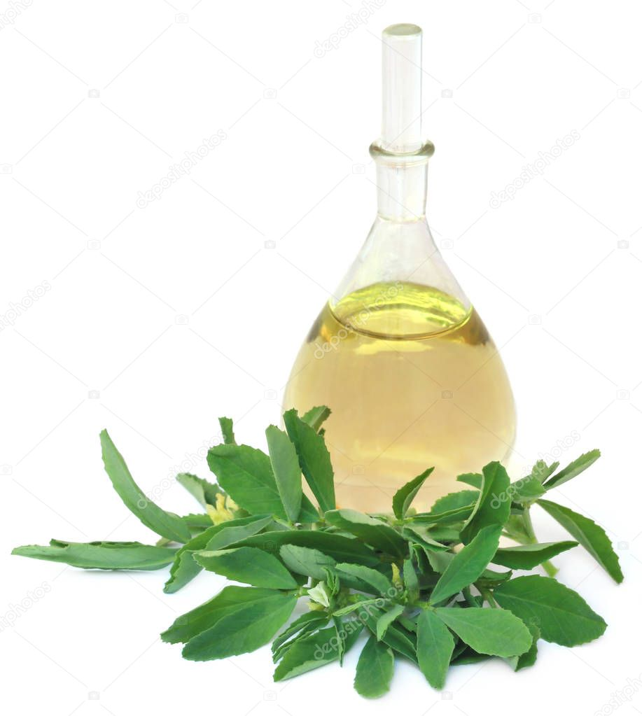 Fenugreek leaves with essential oil