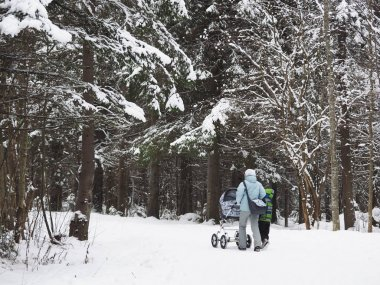 woman with a baby stroller in the forest. winter
