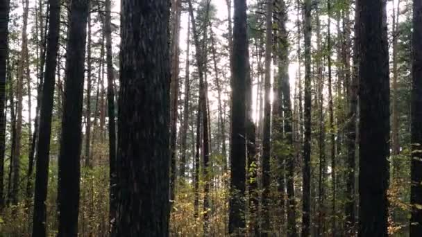 Krásná podzimní les se sluncem. 3840 × 2160. 4k