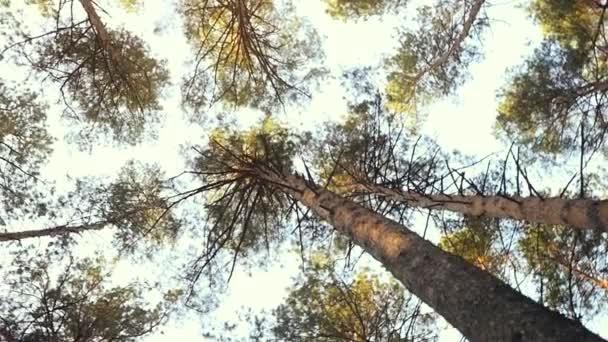 Krásné podzimní les pohled nahoře na obloze v slowmotion. 1920 × 1080