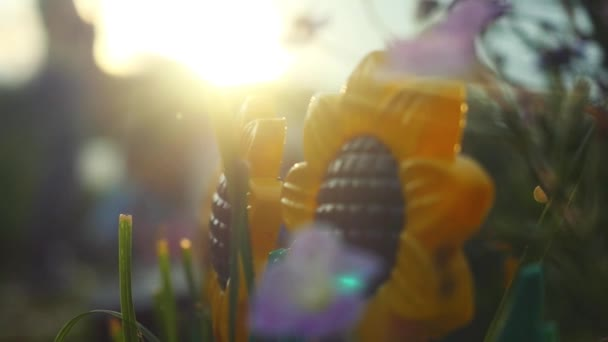 Beautiful colorful sunflower and other flowers in the summer garden in slowmotion with sunshine and lense flare effects. 1920x1080