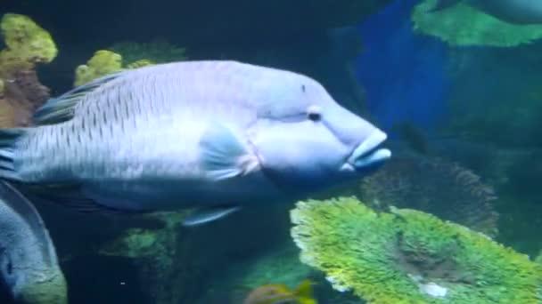 schöne exotische Fische in einem Aquarium zu sehen. Unterwasserszene. 3840x2160, 4k