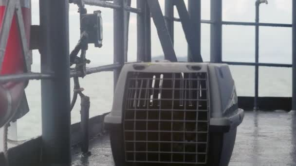 Reisende Maine Coon Katze im Käfig schwimmt auf einem Schiff im Meer. 4k, 3840x2160