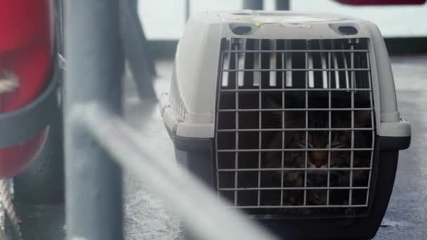 Reisende Maine Coon Katze im Käfig schwimmt auf einem Schiff im Meer. 3840x2160, 4k