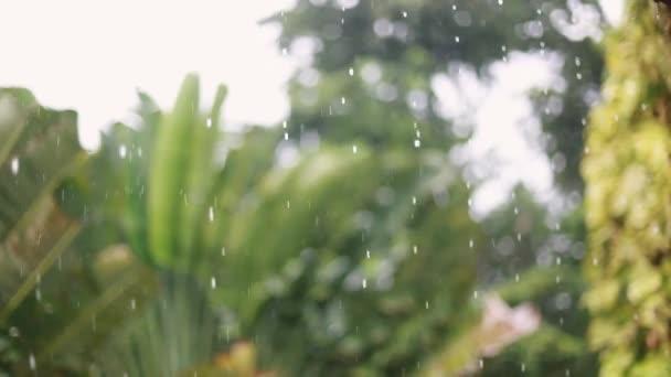 Tropický déšť kapaly na palmami na ostrově Koh Samui změní fokus na stromy, Thajsko 1920 × 1080