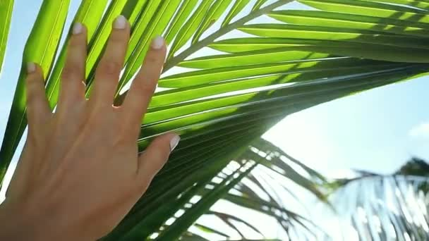 Female hand touching palm leaf and the sun. Woman enjoying bright tropical sun with lens flare effects in slow motion. 1920x1080