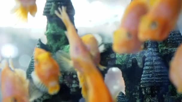 Krásné akvárium mořský život v pomalém pohybu. 1920 × 1080