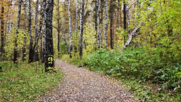 Podzimní listy opadávají v parku z větví listnatý strom, krásný podzim sezóny scenérie. Zpomalený pohyb. 3840 x 2160