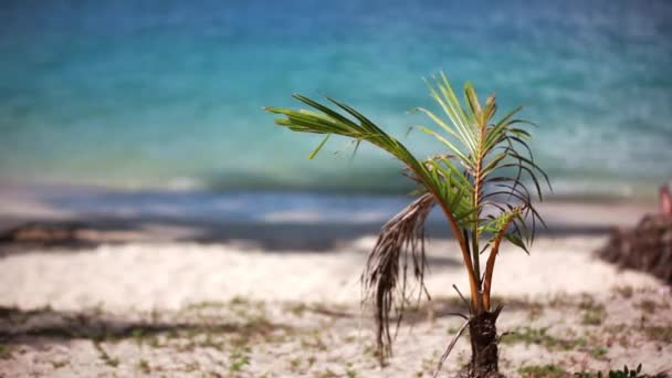 tropical beach and small palm tree. 1920x1080