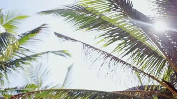 Akumulující paprsky slunce a aby jejich cestu přes listy palmy. Efekt odlesk objektivu. 1920 × 1080