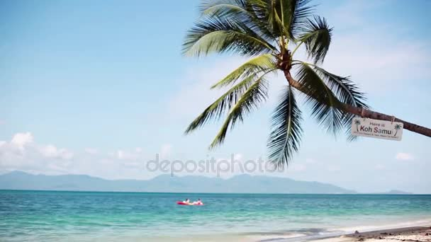 Tropical island vacation. Exotic sandy beach and palm tree on sea coast at sunny day with blue sky. 1920x1080