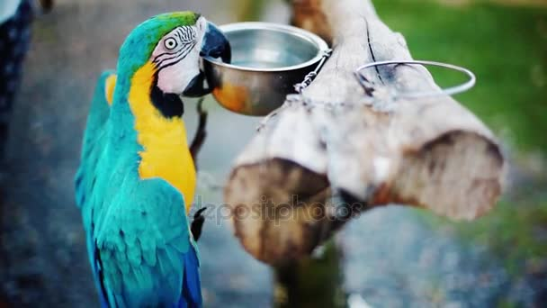 Blue and yellow Macaw parrot in zoo. 1920x1080, hd